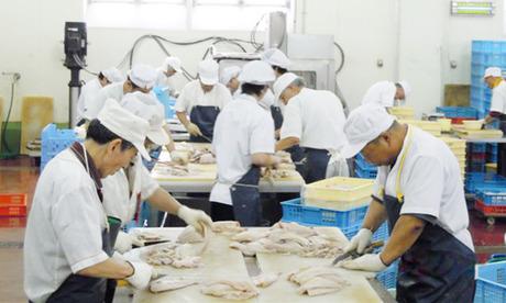 毎朝市場から届くお魚を切身にするお仕事です!お魚屋さん・スーパーの水産部門などの経験が活かせる職場!